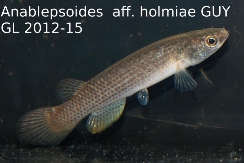 Photos des poissons du congrès KCF 2016 11-1710