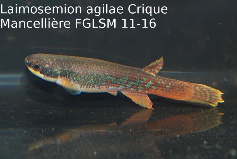 Photos des poissons du congrès KCF 2016 11-1810