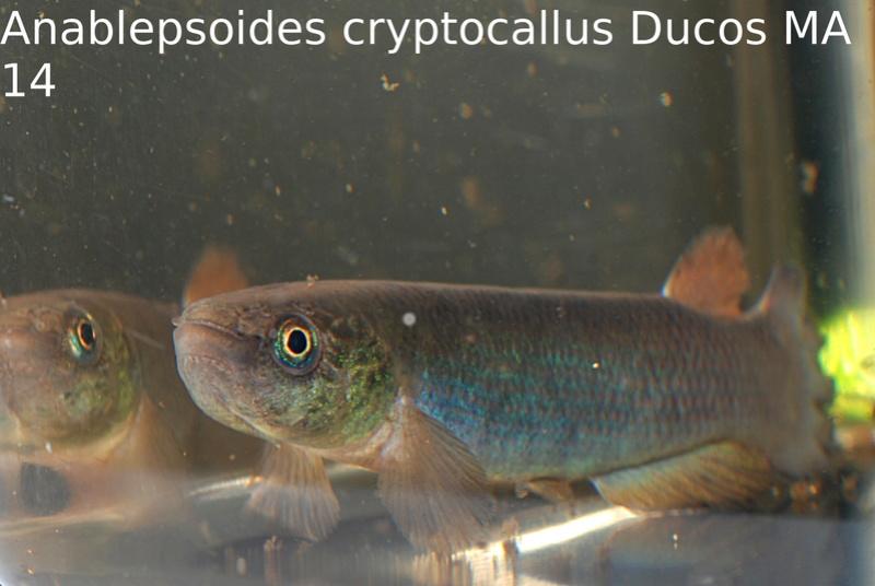 Photos des poissons du congrès KCF 2016 11-310
