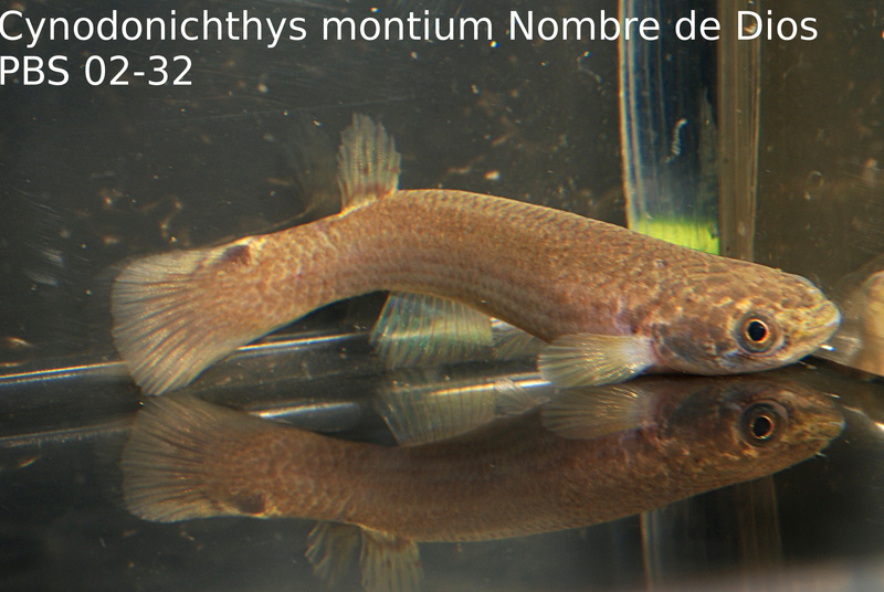 Photos des poissons du congrès KCF 2016 11-610