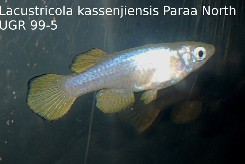 Photos des poissons du congrès KCF 2016 12-1210