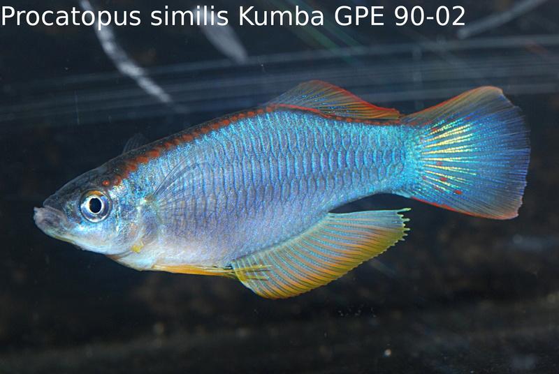 Photos des poissons du congrès KCF 2016 12-1310