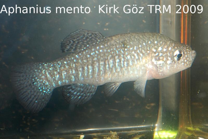 Photos des poissons du congrès KCF 2016 12-1710
