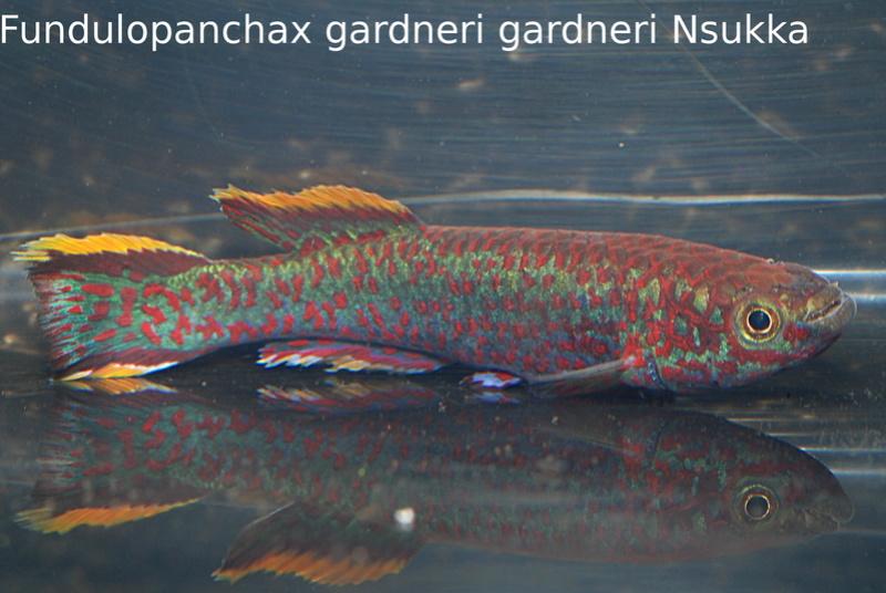 Photos des poissons du congrès KCF 2016 2-1410
