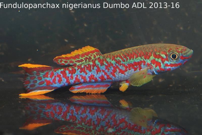 Photos des poissons du congrès KCF 2016 2-1510