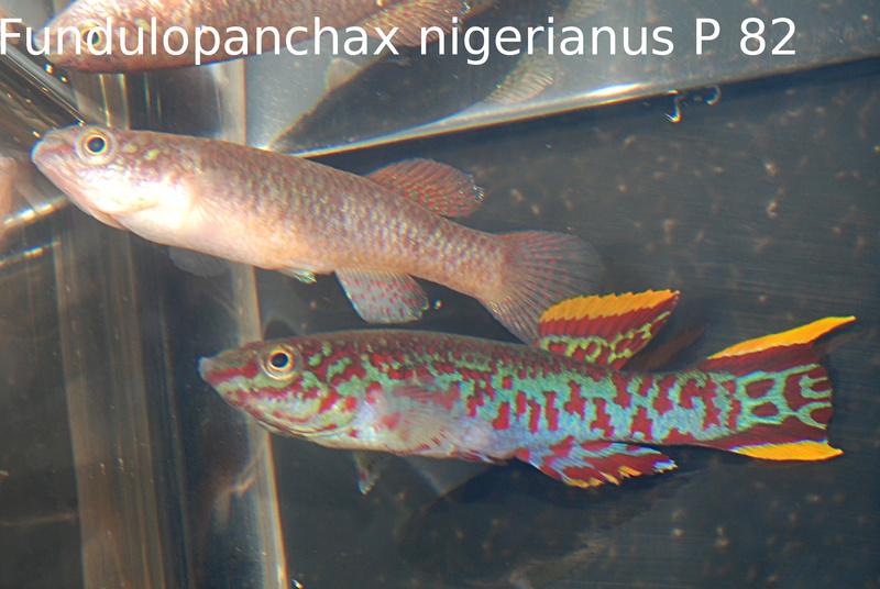 Photos des poissons du congrès KCF 2016 2-410