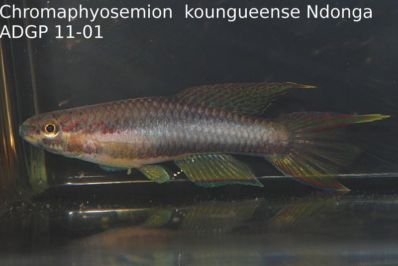 Photos des poissons du congrès KCF 2016 3-2010