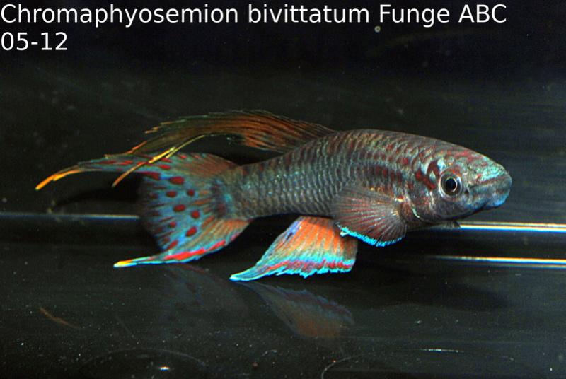 Photos des poissons du congrès KCF 2016 3-3910