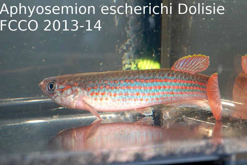 Photos des poissons du congrès KCF 2016 4-1710