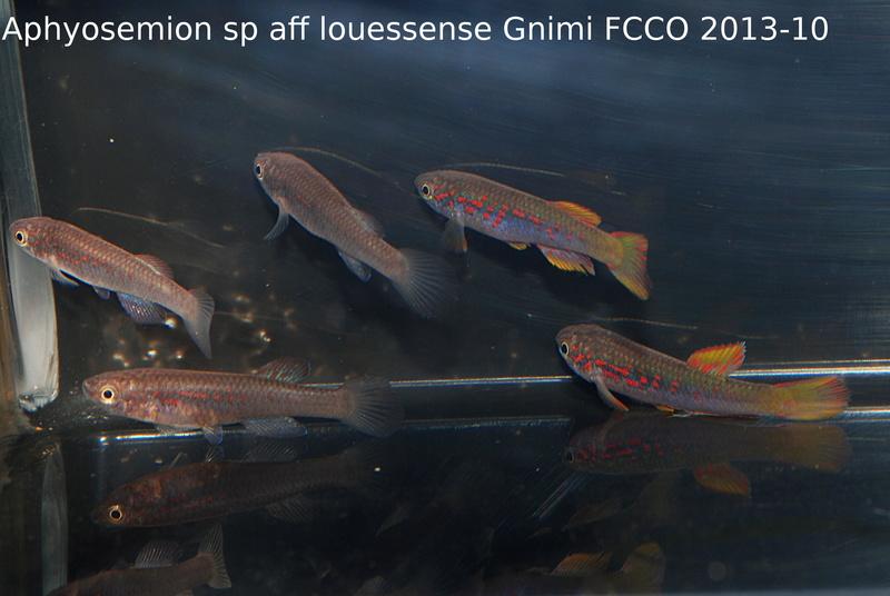 Photos des poissons du congrès KCF 2016 4-27e10