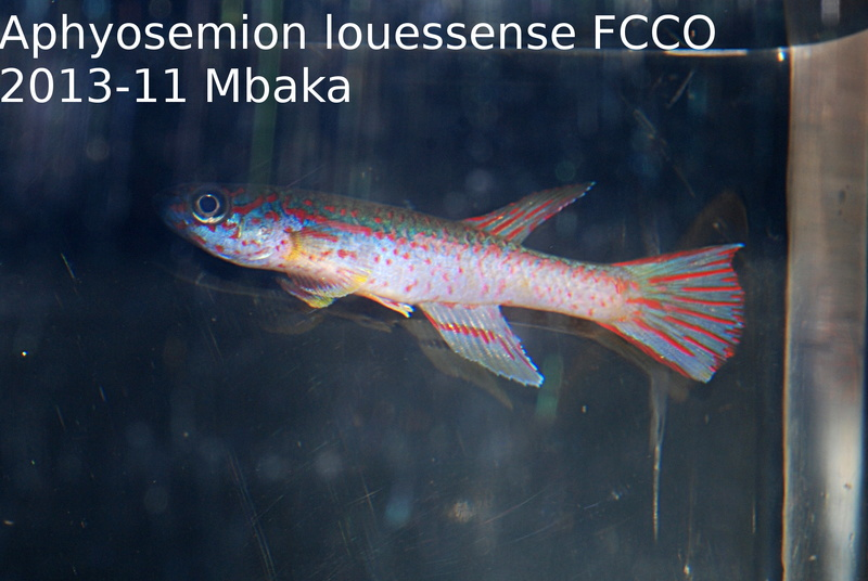 Photos des poissons du congrès KCF 2016 4-710