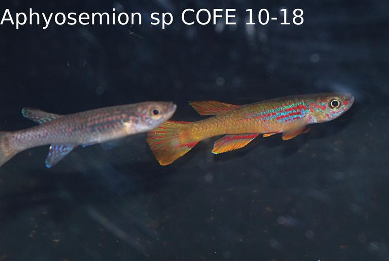 Photos des poissons du congrès KCF 2016 4-810