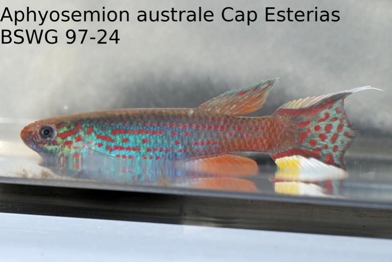 Photos des poissons du congrès KCF 2016 5-1210