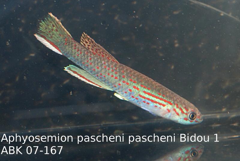 Photos des poissons du congrès KCF 2016 5-3e10