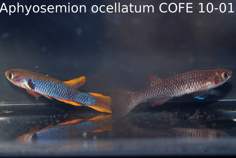 Photos des poissons du congrès KCF 2016 6-110
