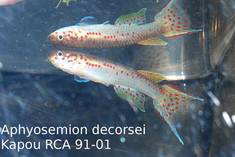 Photos des poissons du congrès KCF 2016 6-1610