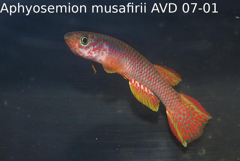 Photos des poissons du congrès KCF 2016 6-2210