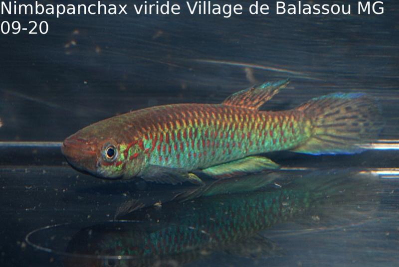 Photos des poissons du congrès KCF 2016 7-1410
