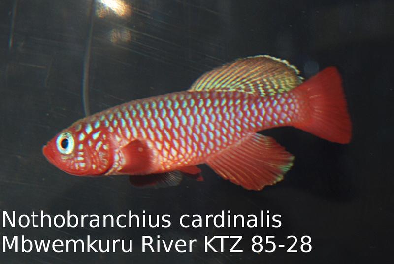 Photos des poissons du congrès KCF 2016 8-1011