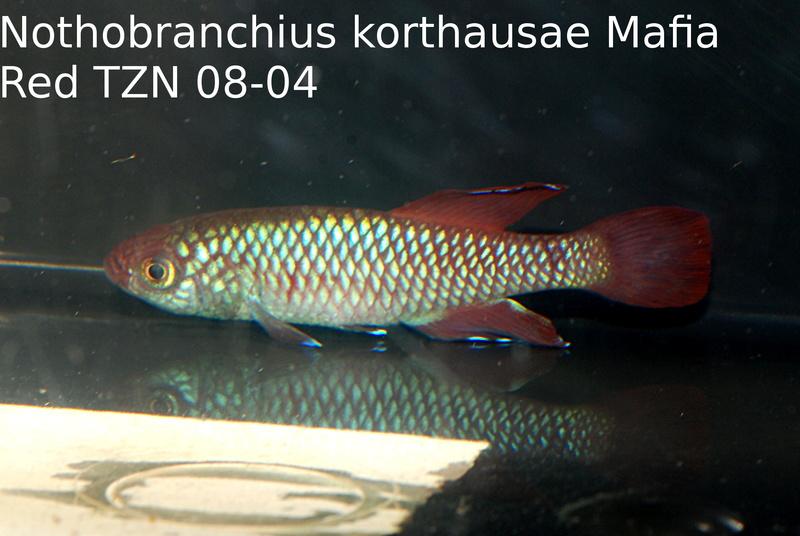 Photos des poissons du congrès KCF 2016 8-1111