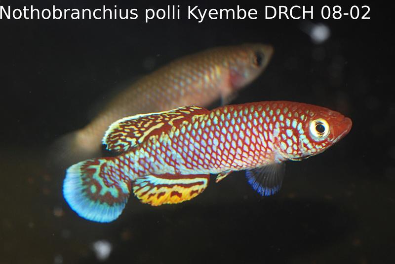 Photos des poissons du congrès KCF 2016 8-1211