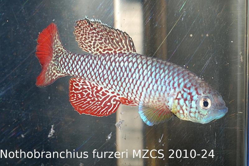 Photos des poissons du congrès KCF 2016 8-511