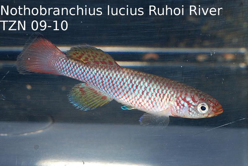 Photos des poissons du congrès KCF 2016 8-711