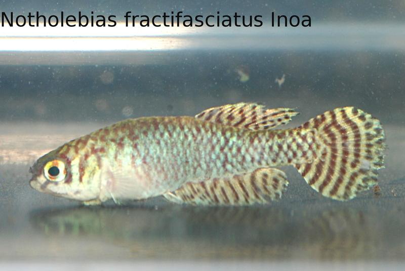 Photos des poissons du congrès KCF 2016 9-110