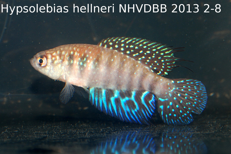 Photos des poissons du congrès KCF 2016 9-1510