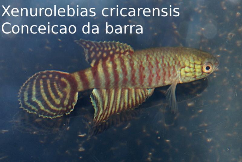 Photos des poissons du congrès KCF 2016 9-4e10