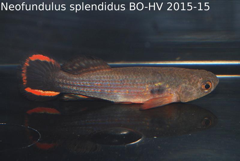 Photos des poissons du congrès KCF 2016 9-610