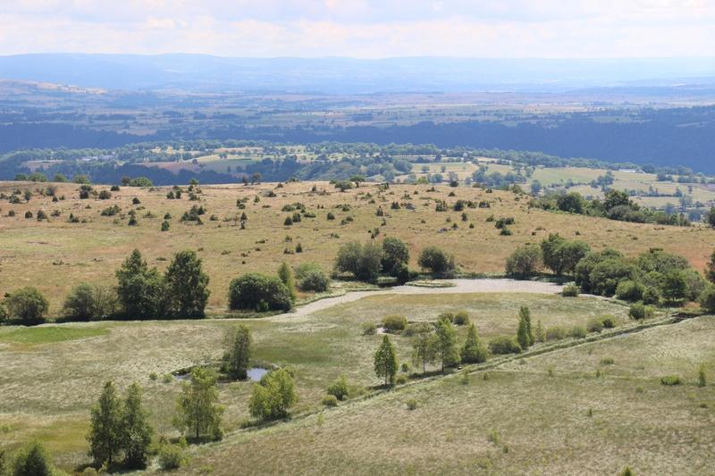 Tourbière de Brujaleine (Chastel-sur-Murat) Img_2213