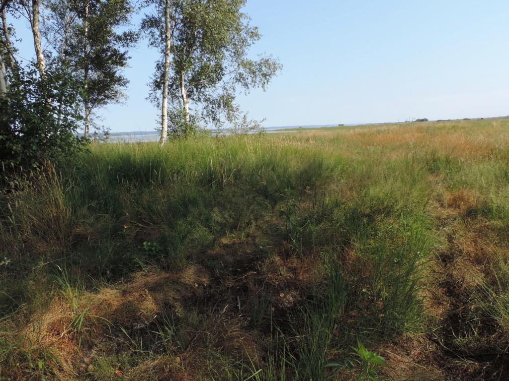 Carabiques Lac d' Hourtin (33) Dscn2118