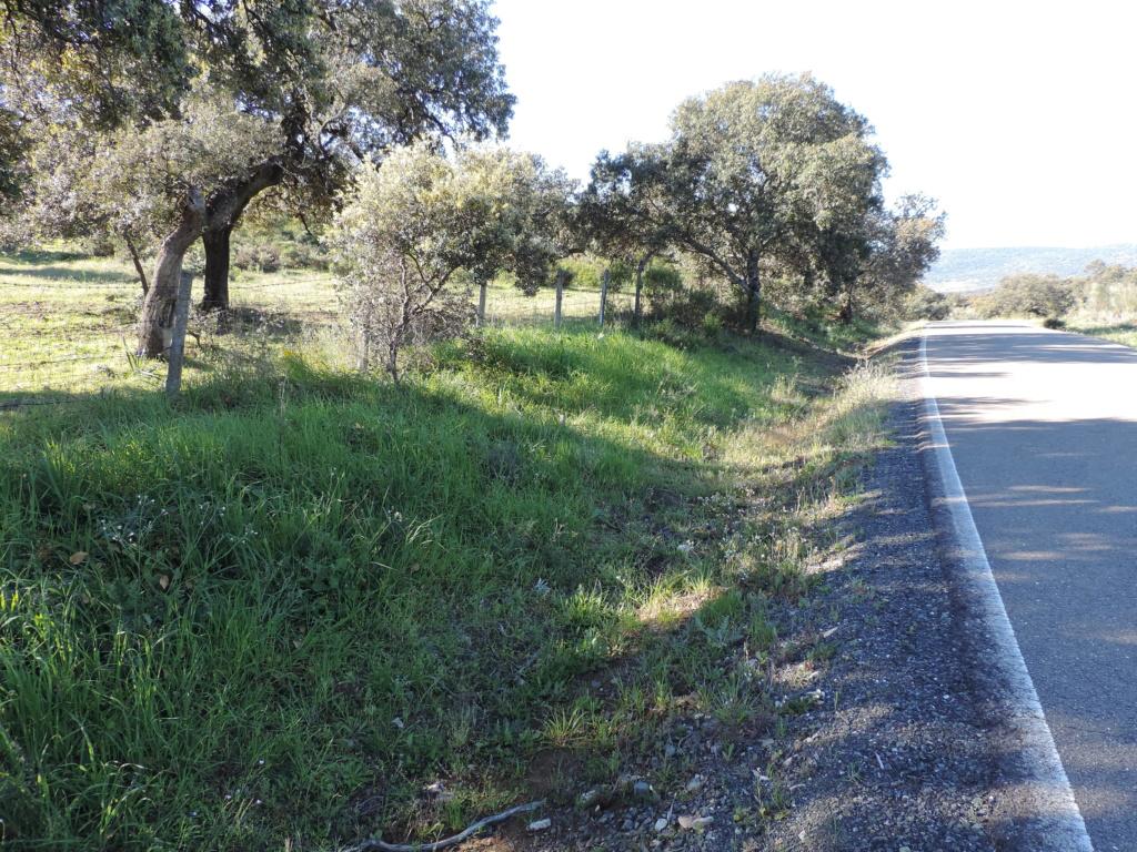 El Garrobo, Séville, Andalousie, Espagne Dscn2810