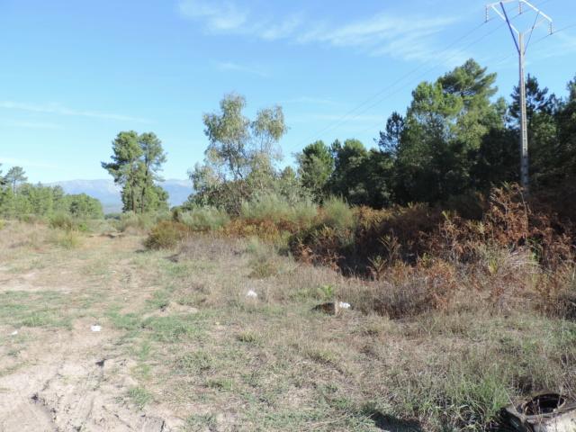 Coléo : Talayuela 248 m EX119, Dscn4222