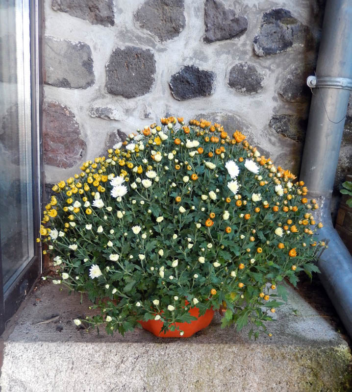 Un bouquet d'arrière-saison ........... 2016-211