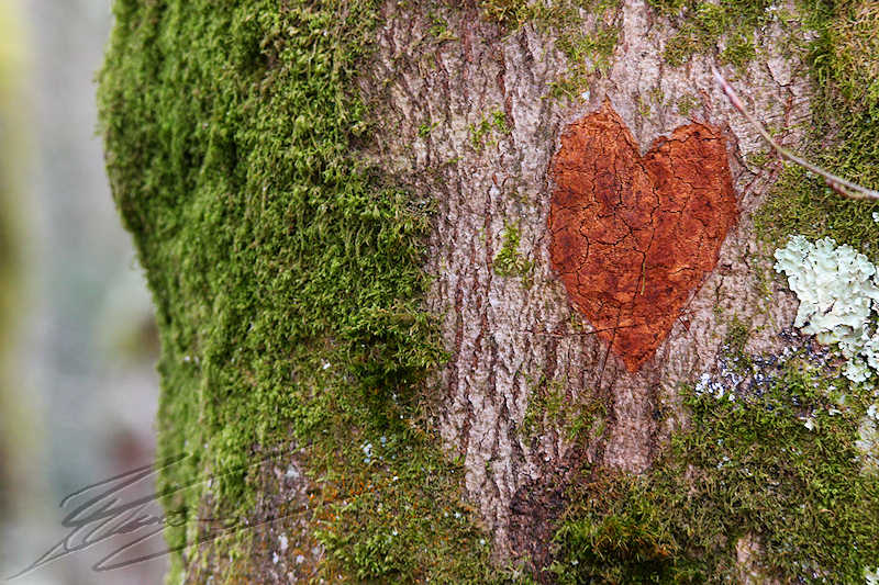 :) Un Post Pour Dire Je T'Aime (: (Du 10/05/15 au 30/01/17) - Page 36 Coeur_10