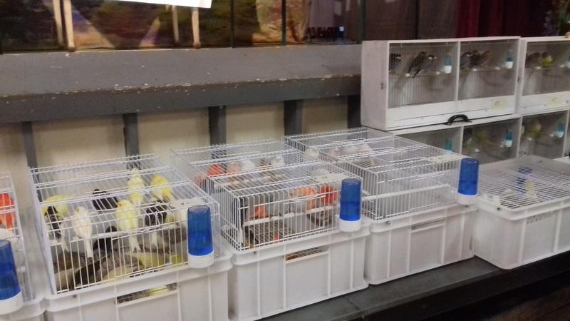 bourses d'oiseaux a flemalle - Page 2 20161040