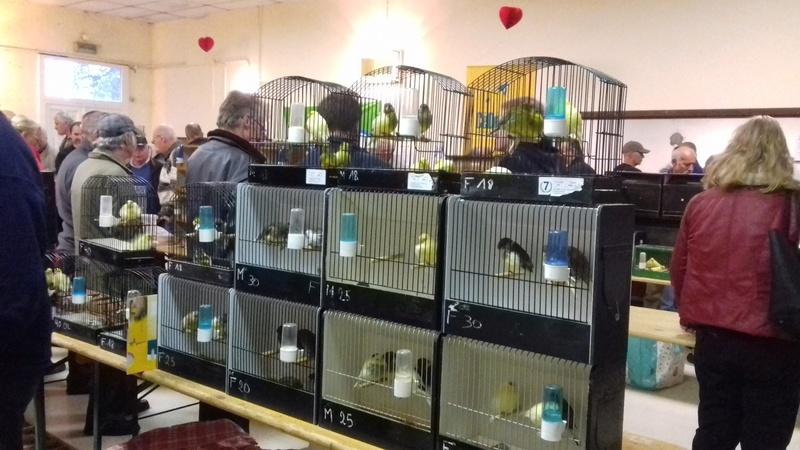 bourses d'oiseaux a flemalle - Page 2 20161043