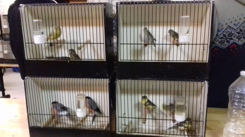 bourses d'oiseaux a flemalle - Page 2 20161046