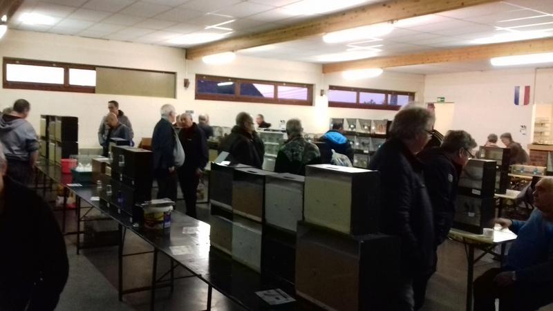 expo et bourse du bouvreuil Hutois  20161060