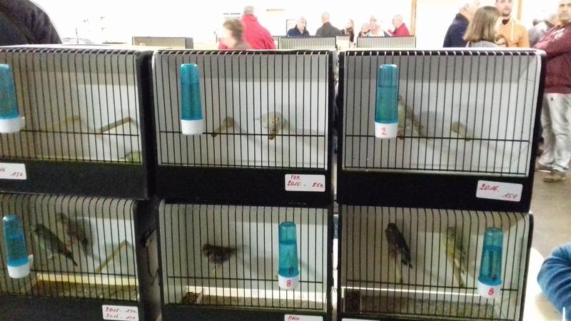 expo et bourse du bouvreuil Hutois  20161062