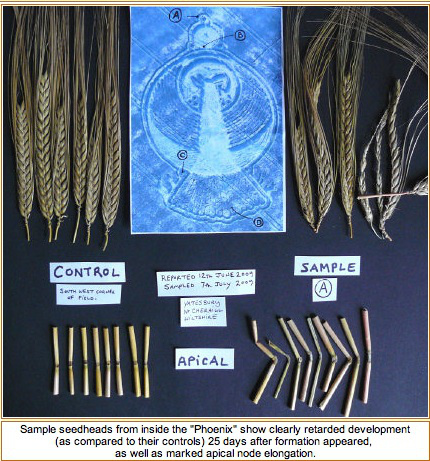 El Misterio de los Crop Circles - Círculos de las Cosechas Estudi10