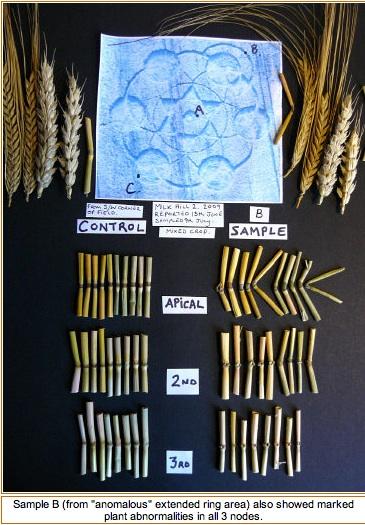 El Misterio de los Crop Circles - Círculos de las Cosechas Estudi13