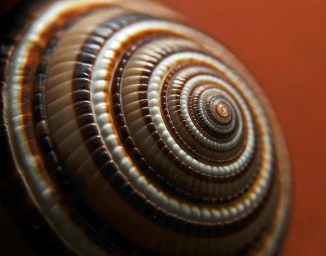 Matemáticas de la Naturaleza: Fractales y Fibonacci Fracta10