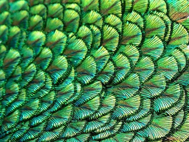 Matemáticas de la Naturaleza: Fractales y Fibonacci Fracta14