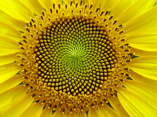Matemáticas de la Naturaleza: Fractales y Fibonacci Fracta20