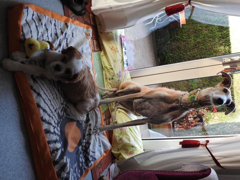 Barbas douce barbuda ,un coeur à prendre Scooby France/ Adoptée - Page 5 Dscn5912