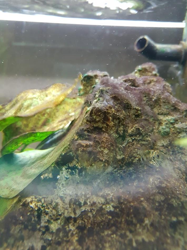 Toute une histoire ... d'algues biensur ! 20160910