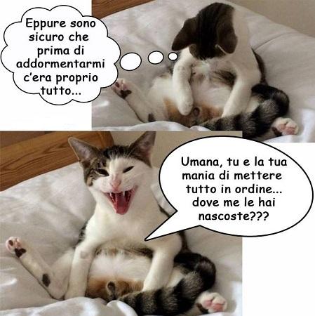 BAU and MIAO - Pagina 15 Miao15
